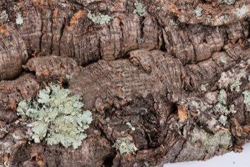 Rå bark